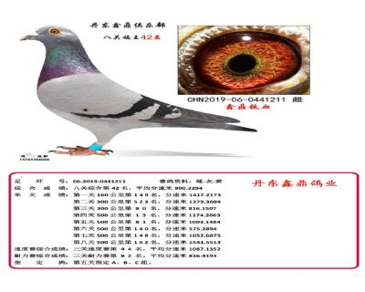 八关鑫鼎铁血42
