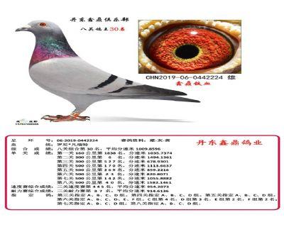 八关鑫鼎铁血30