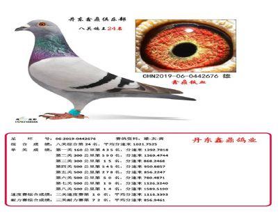 八关鑫鼎铁血24