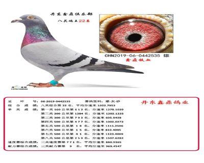 八关鑫鼎铁血22