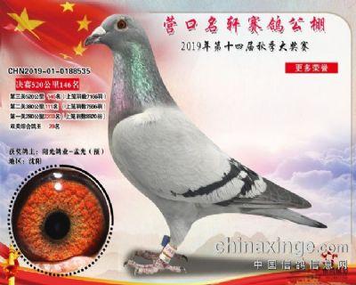 2019明轩决赛146鸽王29