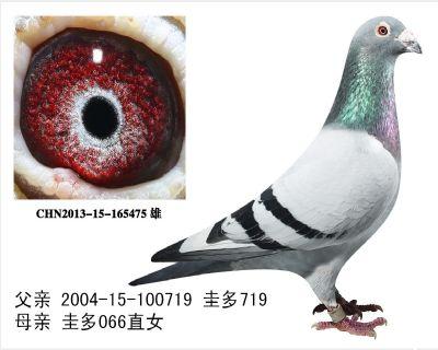 圭多雄165475