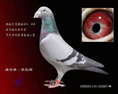 杨欧瓦克607