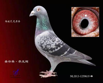 杨欧瓦克619