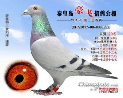 豪飞鸽王季军 (1)