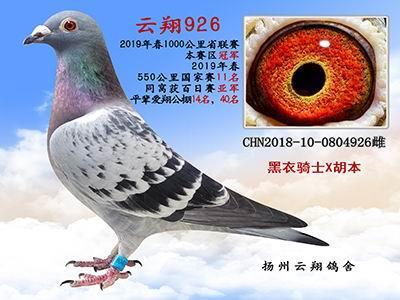 云翔926