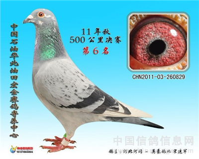 2020年春季幼鸽现正式接受预定!!!