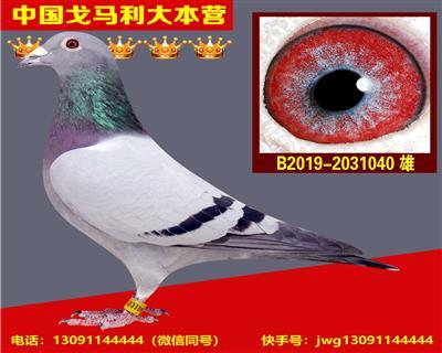 """""""百战天王""""直孙!"""