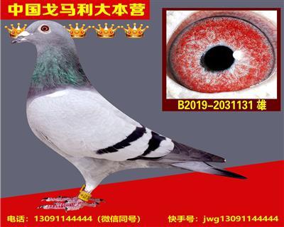 """""""巴龙150""""直孙"""