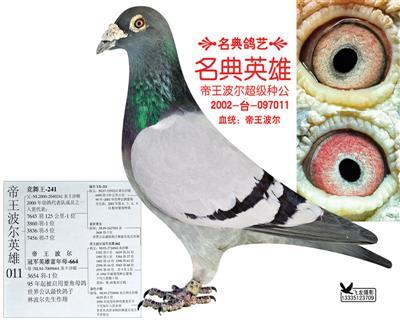 名典鸽艺种公011