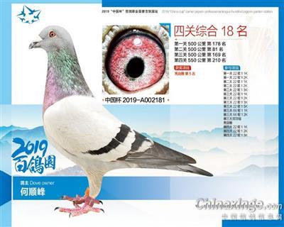 百鸽园成绩鸽