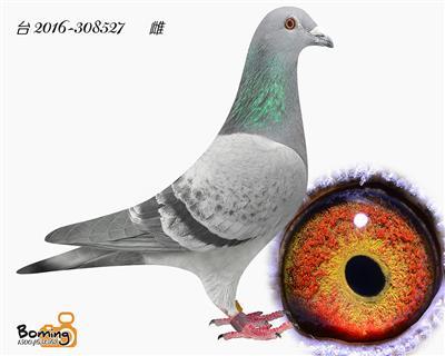 瑞威527(詹森*西翁)