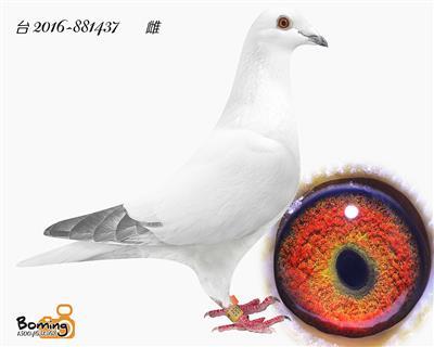 瑞威437(李巴克)