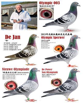 利奥赫尔曼―奥林匹克003世界鸽王冠军家