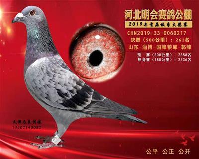 2019年河北明会赛鸽公棚决赛261名