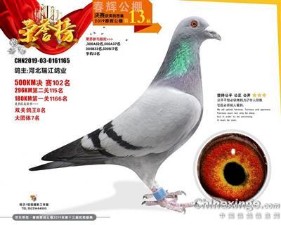 19年北京春辉公棚鸽王亚军