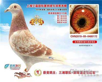 2019年第三届四关鸽王大赛优胜鸽