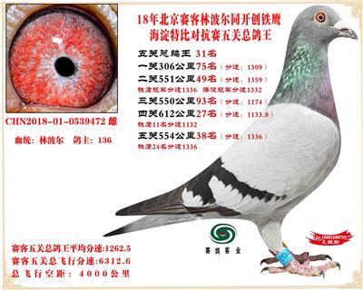 18年北京赛克对抗赛五关总鸽王31名
