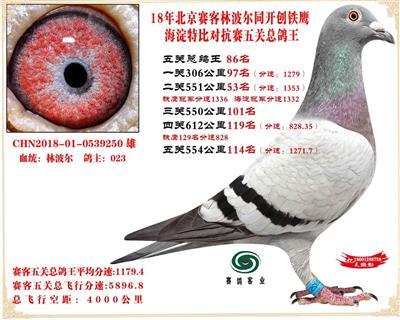 18年北京赛克对抗赛五关总鸽王86名