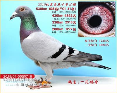 北京爱亚卡普参赛鸽