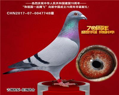 津福505名(津福鸽王5直子)