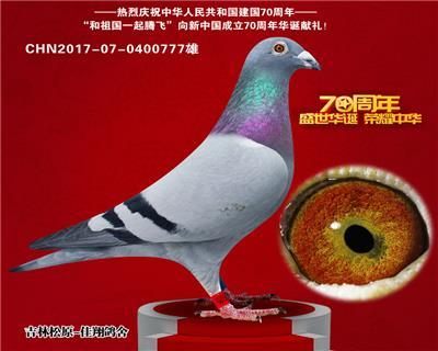 超级种鸽(三关综合16名)