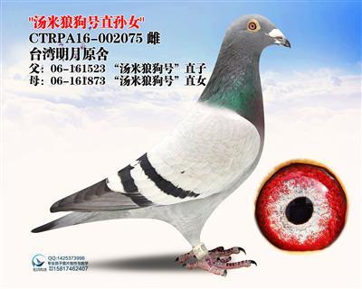 """""""汤米狼狗号""""直孙女"""