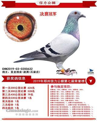 亚龙鸽业---决赛冠军鸽
