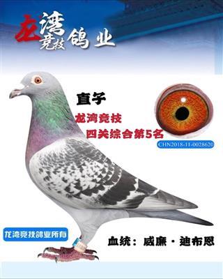 直子.2019龙湾竞技四关综合第5名