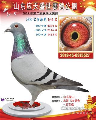 2019年山东应天盛世决赛164名