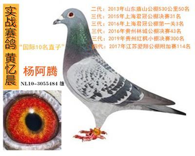杨阿腾金公484