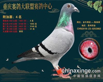 重庆大联盟附加赛4名雌
