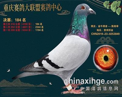重庆大联盟决赛184名