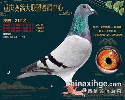 重庆大联盟决赛212名雌