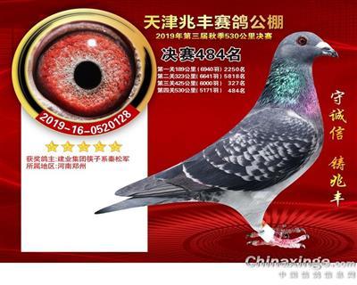 天津兆丰公棚决赛484名