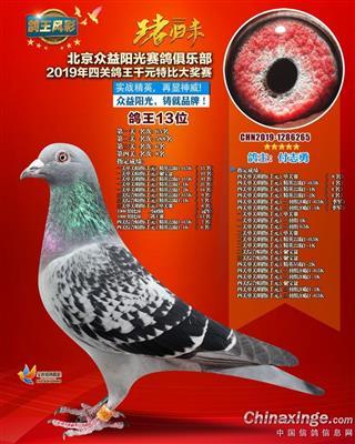 北京众益阳光四关综合鸽王13名