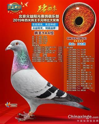 北京众益阳光四关综合鸽王144名