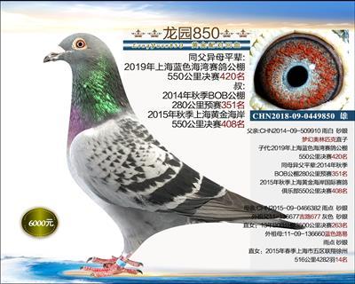 迎新年 里奥×黄金配对3