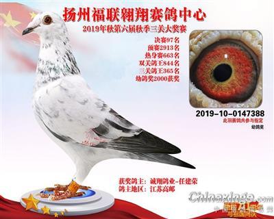 扬州福联翱翔赛鸽中心奖鸽