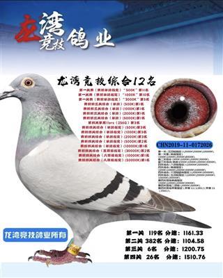 2019龙湾竞技四关综合第12名