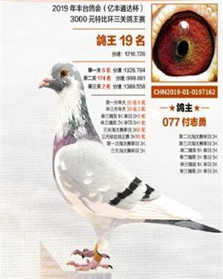 北京丰台协会3000元特比综合鸽王19名