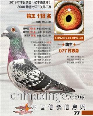 北京丰台协会3000元特比综合鸽王118