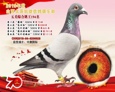凯旋俱乐部五关综合鸽王194名!