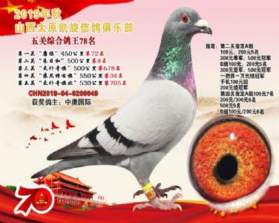 凯旋俱乐部五关综合鸽王78名!
