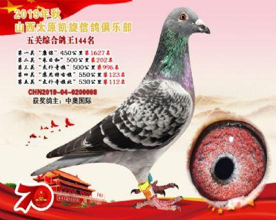 凯旋俱乐部五关综合鸽王144名!