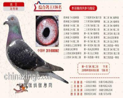 2019秋季北京开创者综合鸽王136名