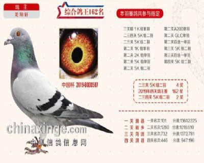 2019秋季北京开创者综合鸽王162名