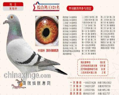 2019秋季北京开创者综合鸽王121名