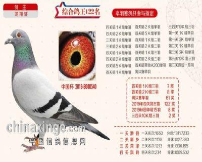 2019秋季北京开创者综合鸽王122名