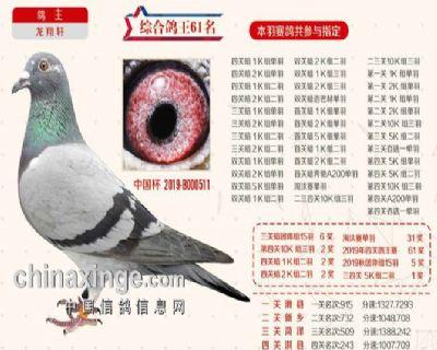 2019秋季北京开创者综合鸽王61名